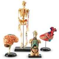 Image Anatomy Models Set