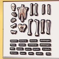 Image 3-D Skeleton Demonstration Magnets